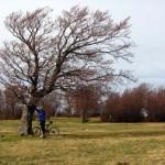 mountain bike ai prati di sara
